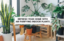 Top 10 Air Purifier Plants Ideal for your Home