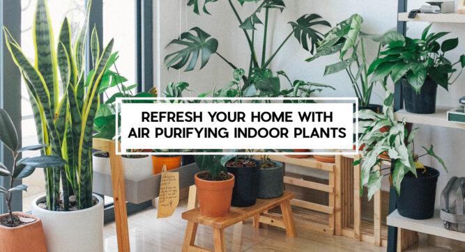 air purifier indoor plants